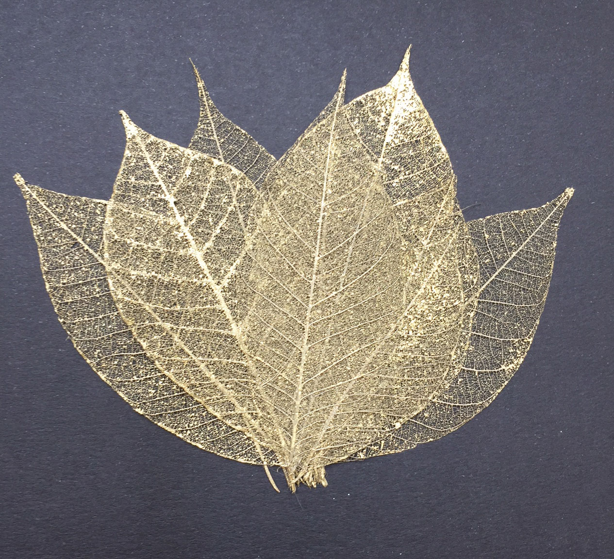 Rubber Tree Leaves - Gold 3""