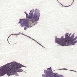 Angel Wings - Deep Violet