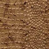 Reptile Desert Gold