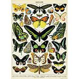 Butteryfly 2